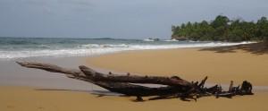 043_0032 Panama - Bocas del Toro - Isla Colon - Bluff Beach