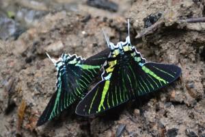 101 0088 Peru - Iquitos - Arco Iris