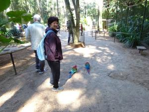 120 0190 Brasil - Parque das Aves