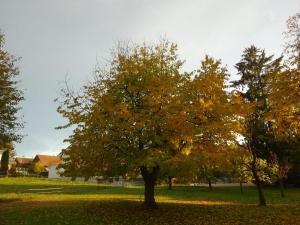 181106 Zu Hause Herbst 03