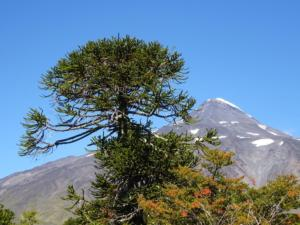 165 0013 Chile - Fahrt nach Aluminé - Argentina - Volcan Lanin